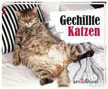 gechillte-katzen